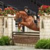Daryl Whitmoyer Hunter Jumper Rider