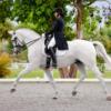 Francesca Nicoletti Dressage Rider