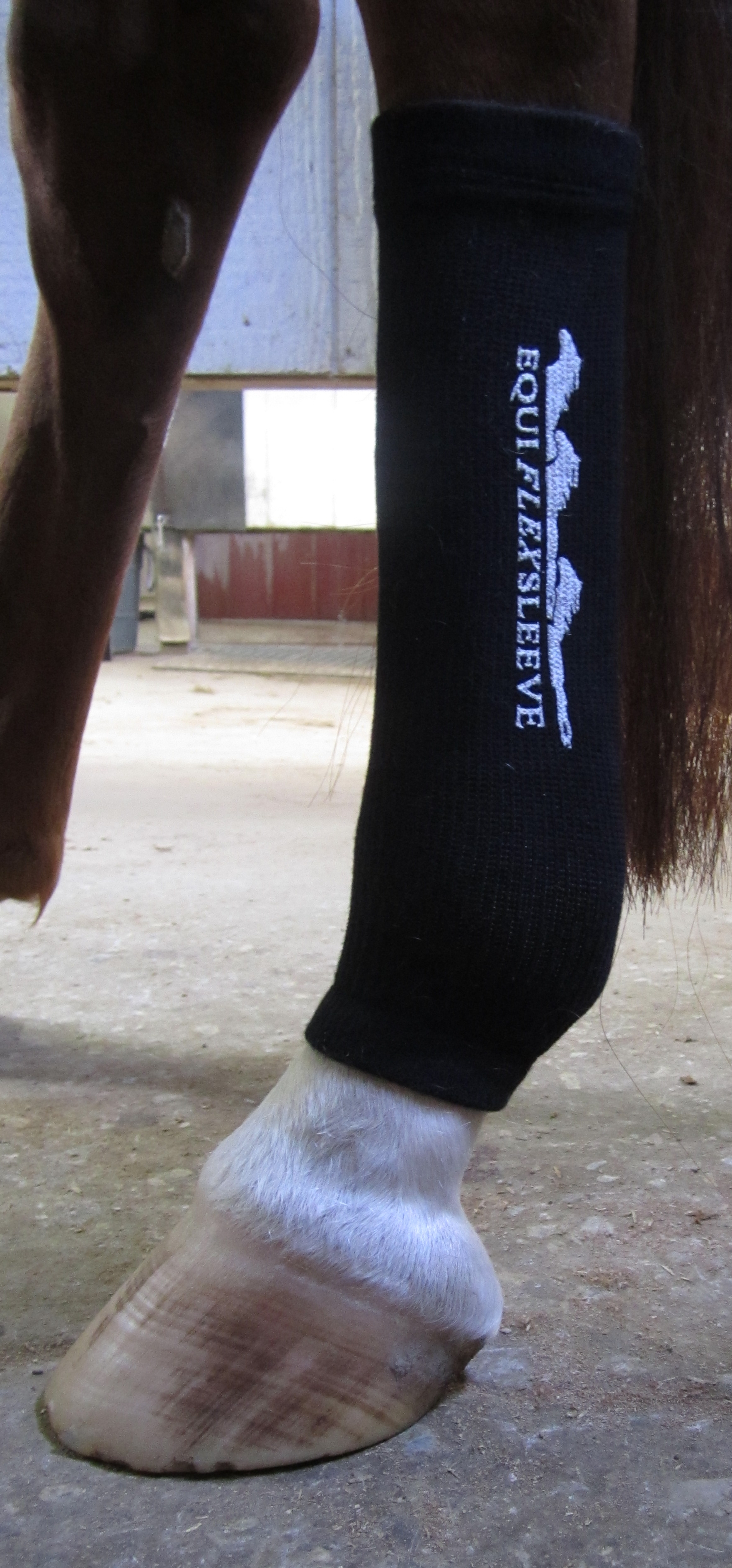 Equiflexsleeve, the revolution in equine leg support