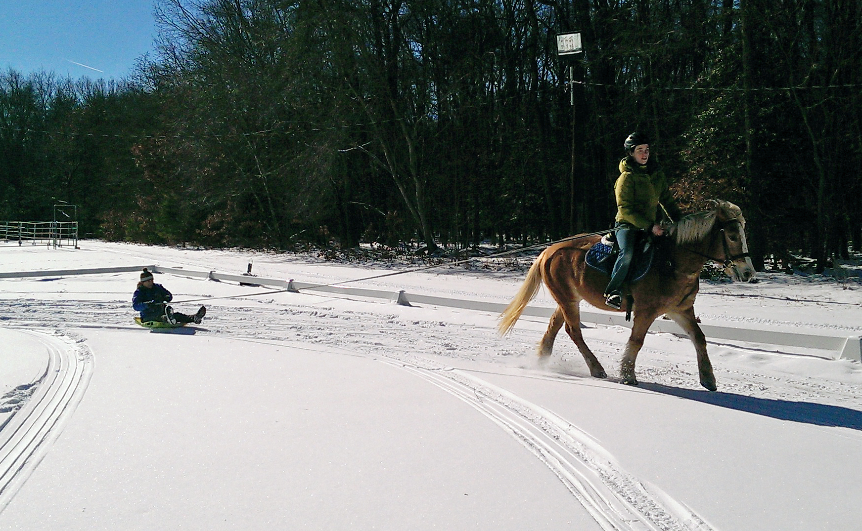 Dory, getting in touch with her draft horse roots.